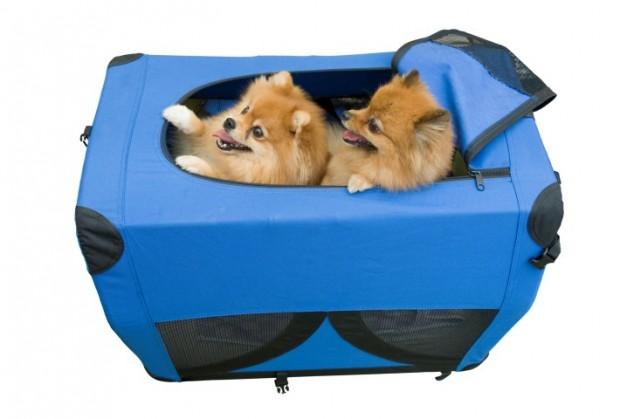 acessórios para cães