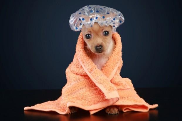 cachorro de banho tomado