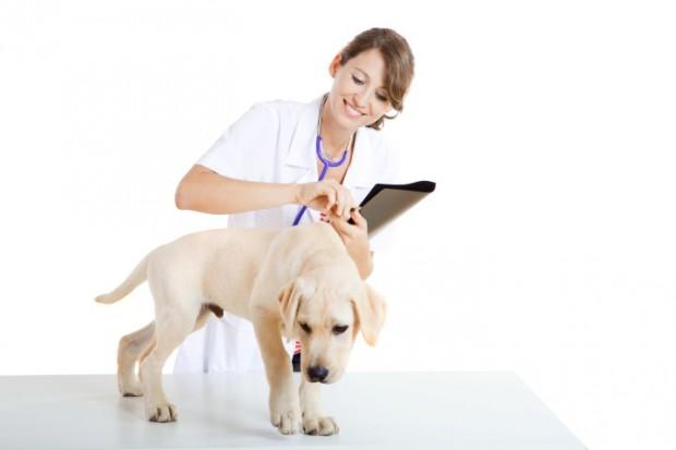 cão com gastrenterite