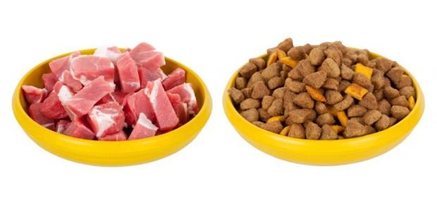 alimentação natural x ração